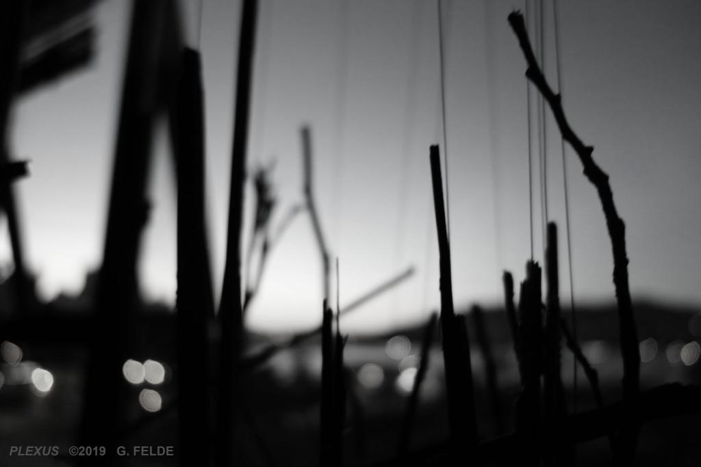 `G Felde - Georgia Straight Dig Ad ECC 2019 fin